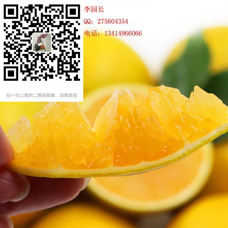 红橙_广州慕伟贸易有限公司