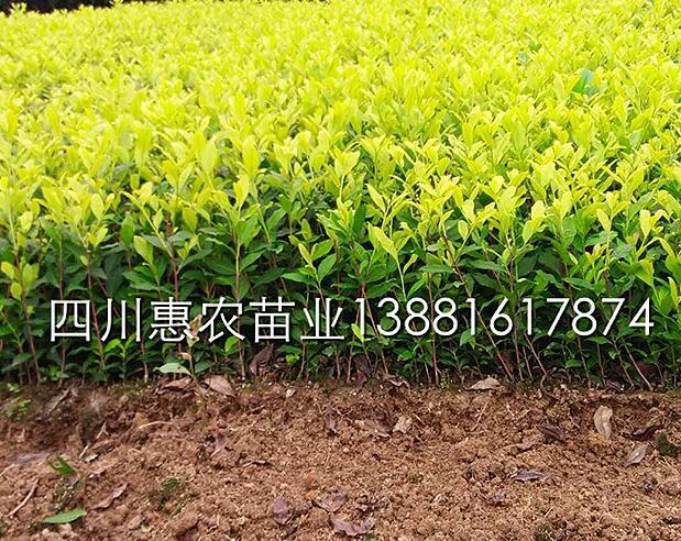 雅安市名山区惠农苗木种植农民专业合作社形象图