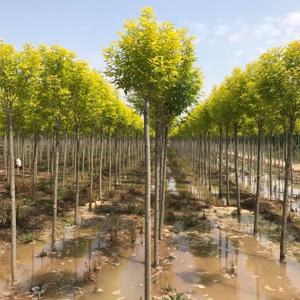 惠民县稀景苗木种植专业合作社形象图